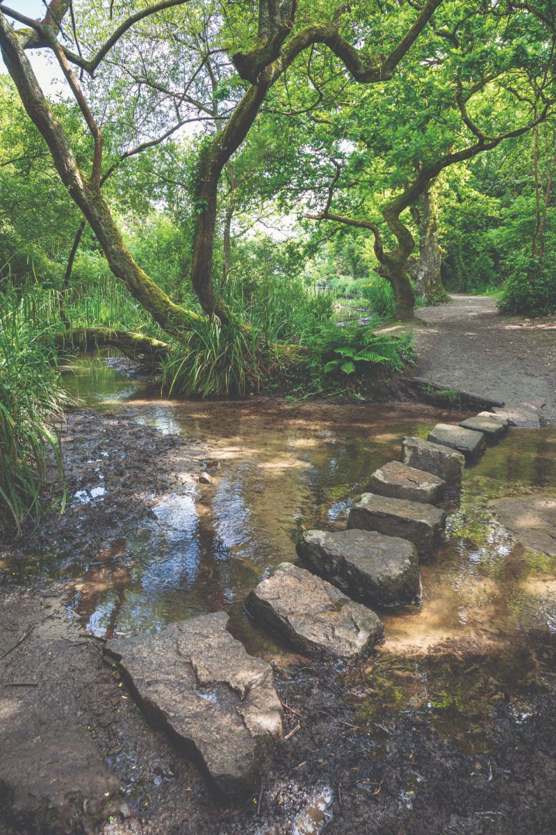 Stepping stones across the stream in St Catherine's Woods