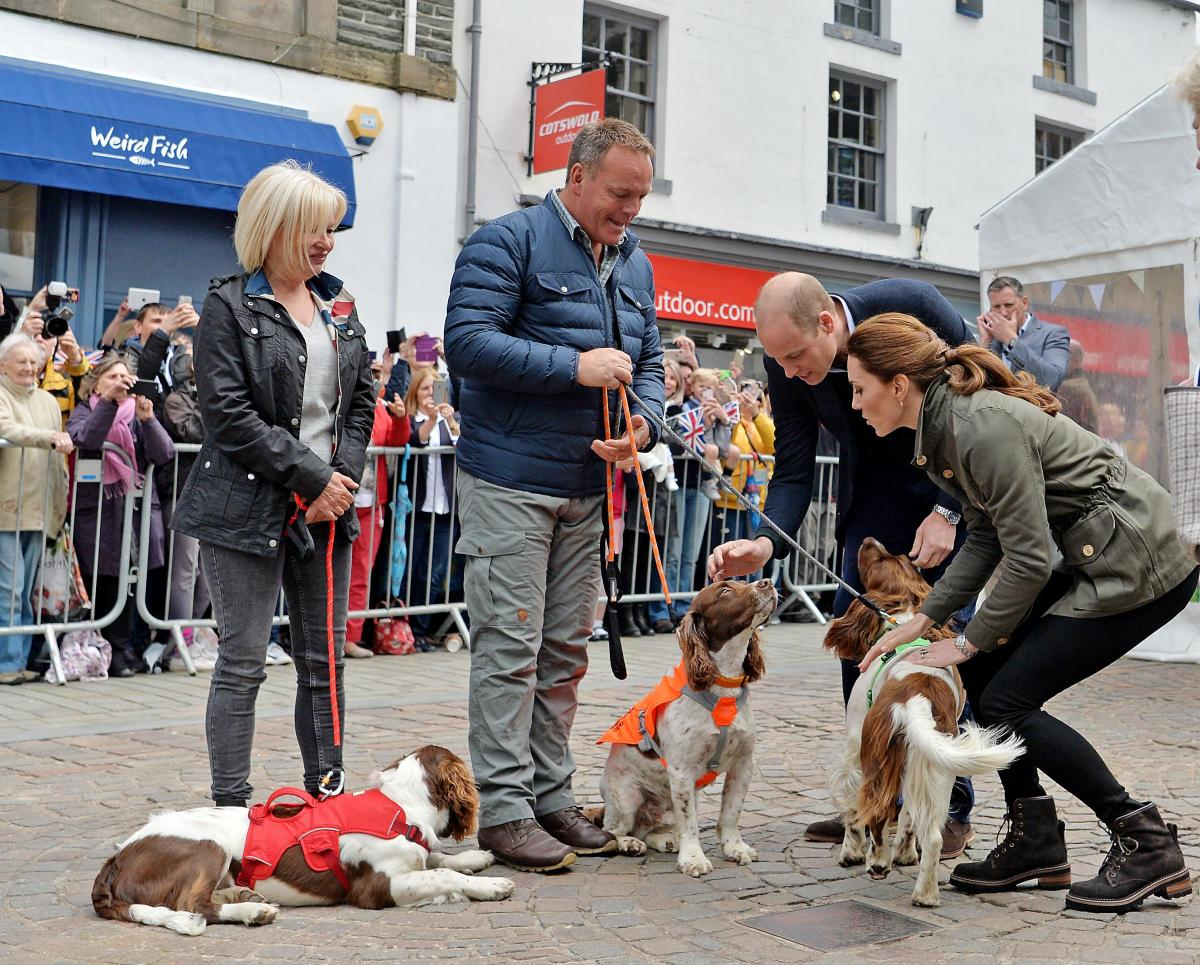 English Springer Spaniels Max, Paddy and Harry with Duke and Duchess of Cambridge