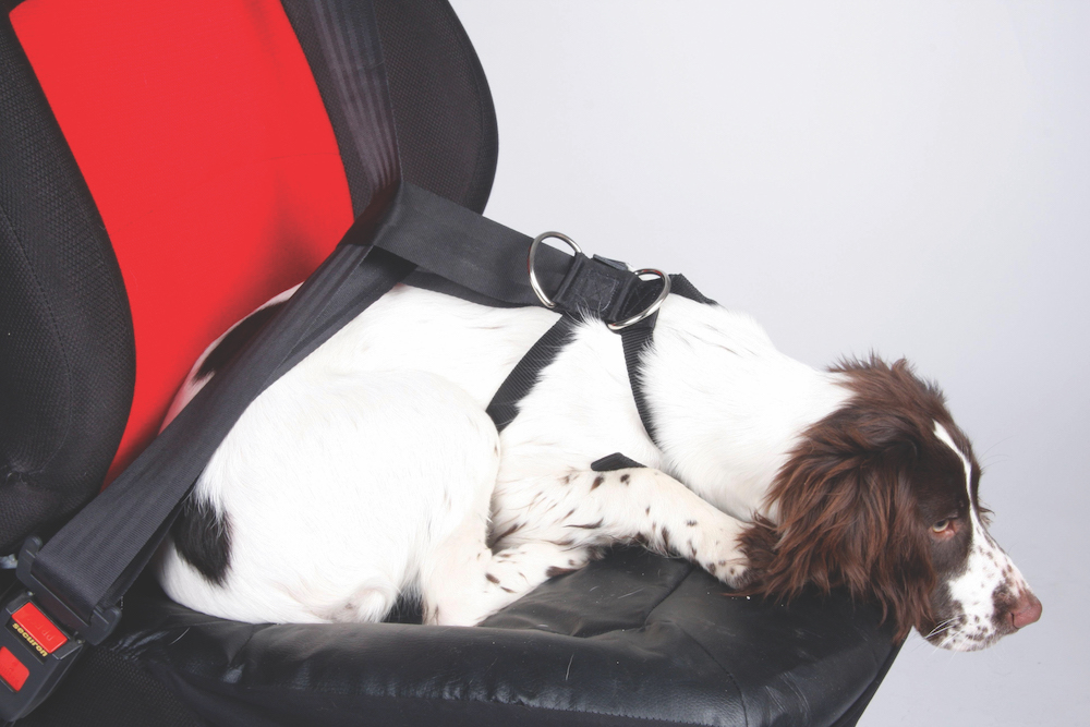 Restraints for dogs are also essential when travelling with pets (IMAGE Halfords)